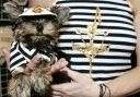 Pets-fashion-week-A-dog-a-012