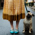 the-sartorialist-pug